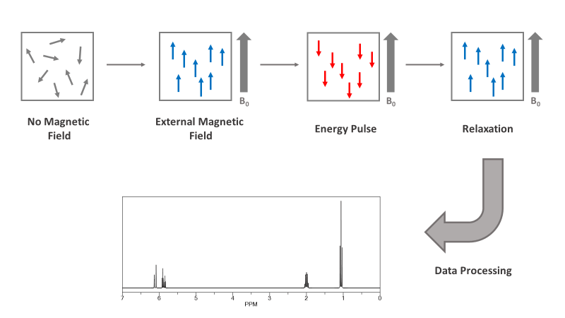 NMR Magnetic Field Pulse Graph